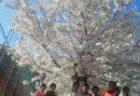 春休み平日短期スクール 4月4日、5日   レポート